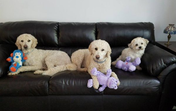 Dogs with their toys from St Mary's