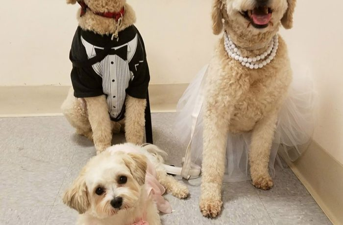 Bride, Groom and Flower Girl – Halloween 2017